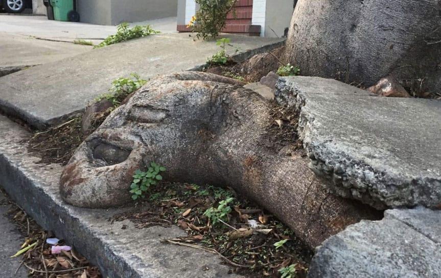 tree sidewalk repair