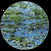 waterpool circle