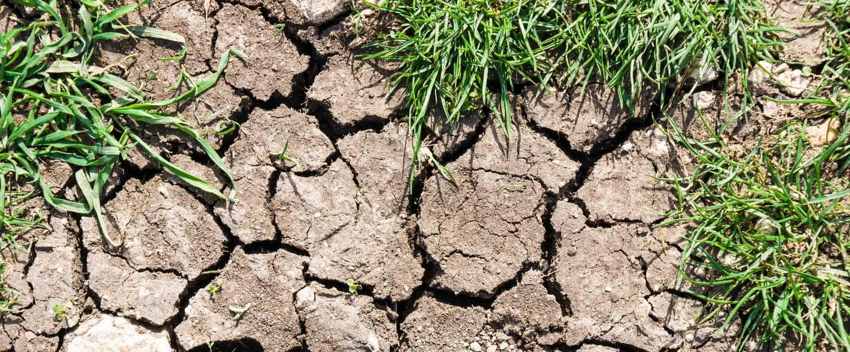 expansive soil